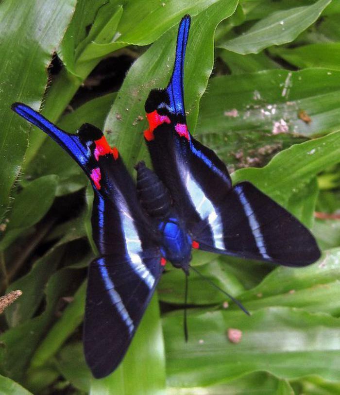 photos de papillons, rare espèce de papillon