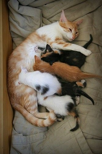 momma cat with her beautiful kittens
