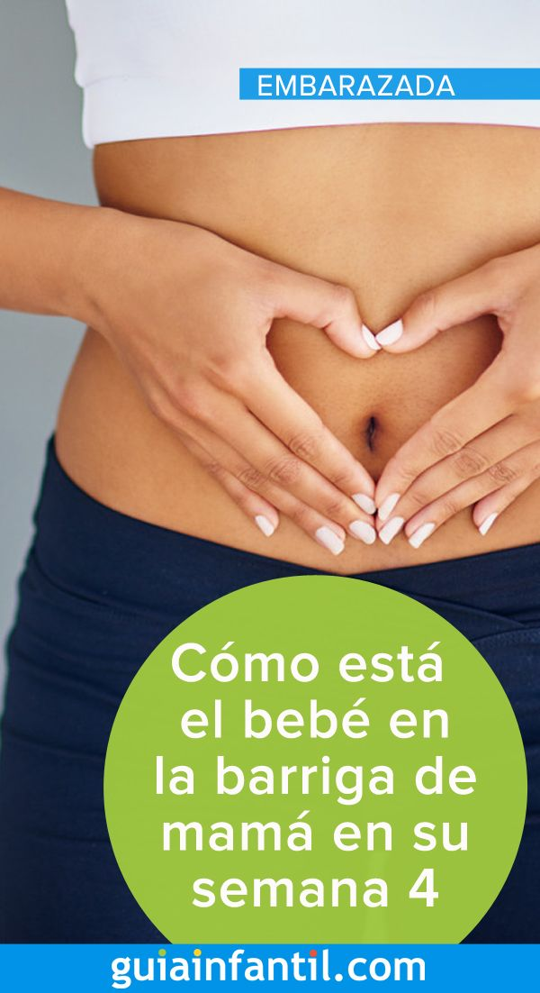 Cómo Está El Bebé En La Barriga De Mamá En Su Semana 4 4 Semanas De Embarazo Embarazo Desarrollo Fetal