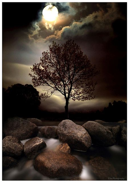 Lone tree in moonlight