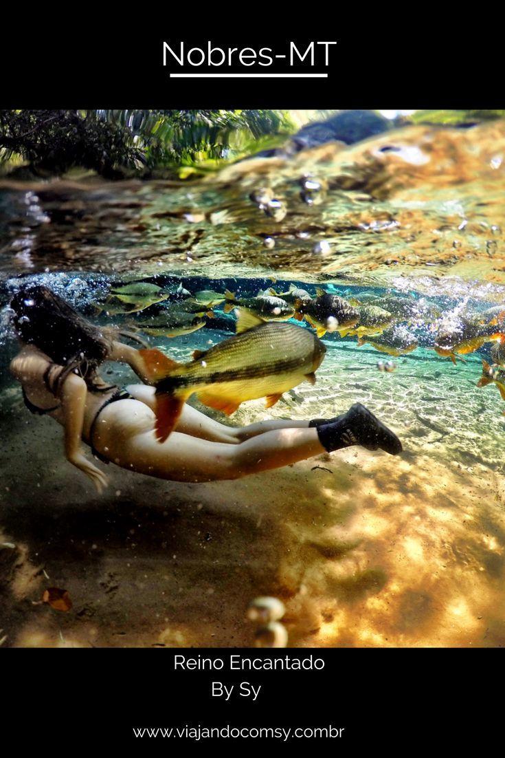 Quer flutuar nas aguas cristalinas do Reino Encantado em Nobres? saiba como lendo todos os detalhes no blog