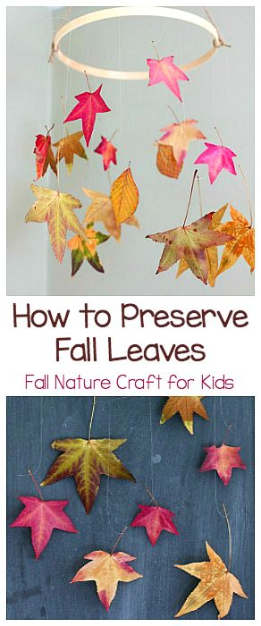 How to Preserve Fall Leaves: Fall Nature Craft for Kids