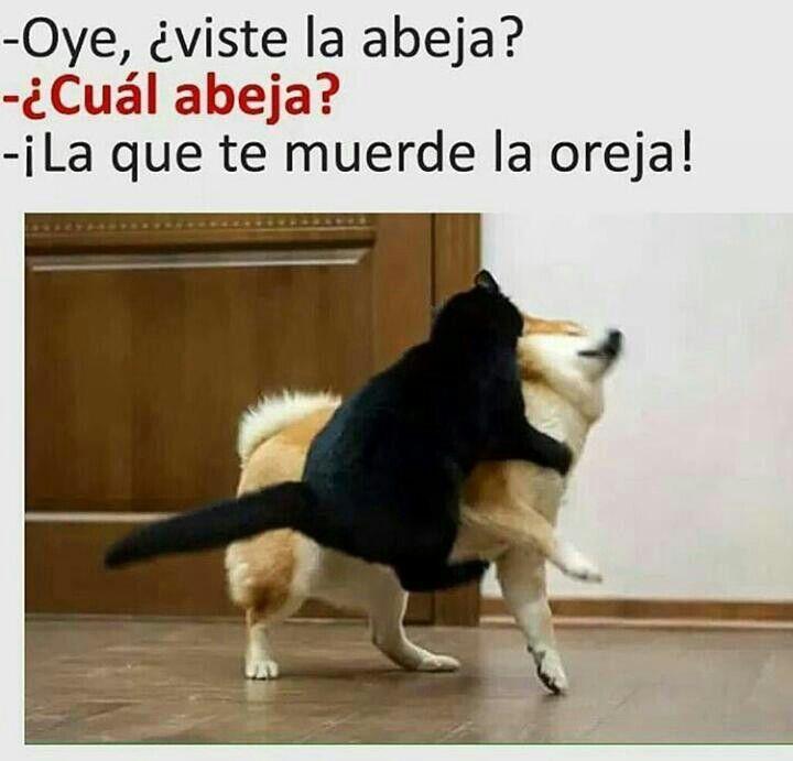Viste La Abeja Funny Animal Memes Animal Memes Funny Cat Memes