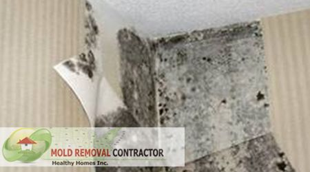 54 Best Images About Black Mold On Pinterest Health