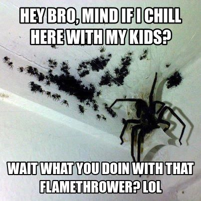creepy spider meme | Scary spiders Oct 30 02:46 UTC 2012