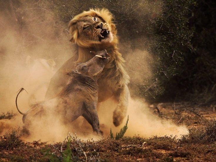 33 Fotos de animales que no podrás creer que son reales. - Taringa!