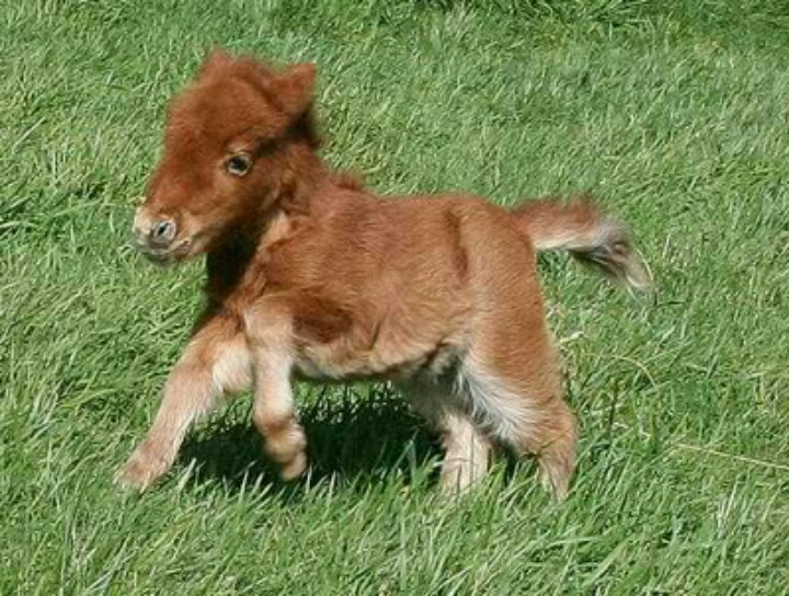 144 best Mini horses images on Pinterest | Adorable animals, Cutest ...