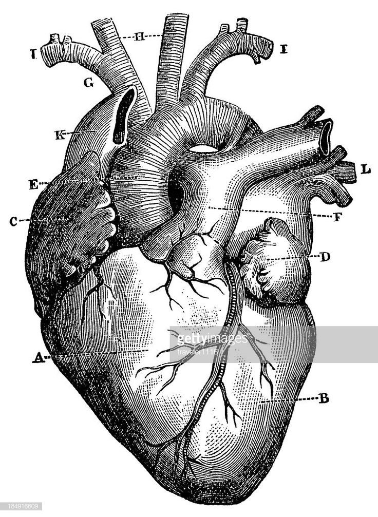 Engraving From 1872 Featuring A Human Heart. en 2020 ...