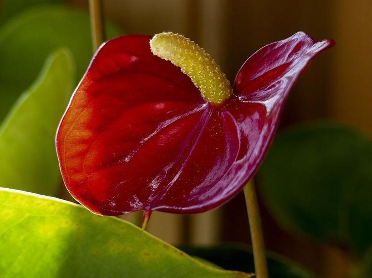Cómo cuidar las plantas de interior en otoño - http://www.jardineriaon.com/como-cuidar-las-plantas-de-interior-en-otono.html
