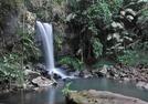 Curtis Falls - Mount Tambourine