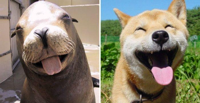 #интересное  Вот почему морские котики на самом деле «морские собачки» (20 фото)   Несмотря на свое название, морским котикам более родственными являются не кошки, а собаки. И хотя собаки живут на суше, а морские котики обитают в воде, и те и другие относятся к одно�