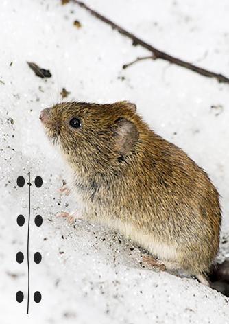 Tunnistatko pihalla vierailleen eläimen jäljet? Katso Meidän Talon juttu jäniksen, hiiren ja muiden tuttujen eläinten jäljistä!