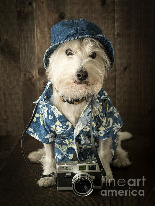 """Vacation Dog by Edward M. Fielding - from the new book """"the Quotable Westie"""""""