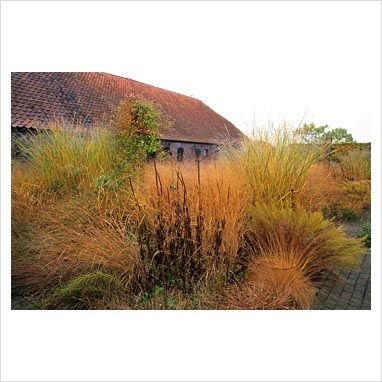 17 best images about garden ornamental grasses on for Ornamental grass that looks like wheat