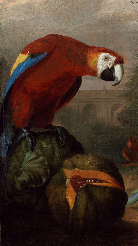Bogdány Jakab: Két arara, kakadu és szajkó gyümölcsökkel, részlet, olaj, vászon, 98 x 128,5 cm
