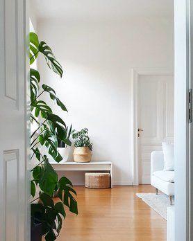 Monstera, Foto Von Mitglied _carinchen_ #solebich #wohnzimmer #livingroom  #interior #interiordesign