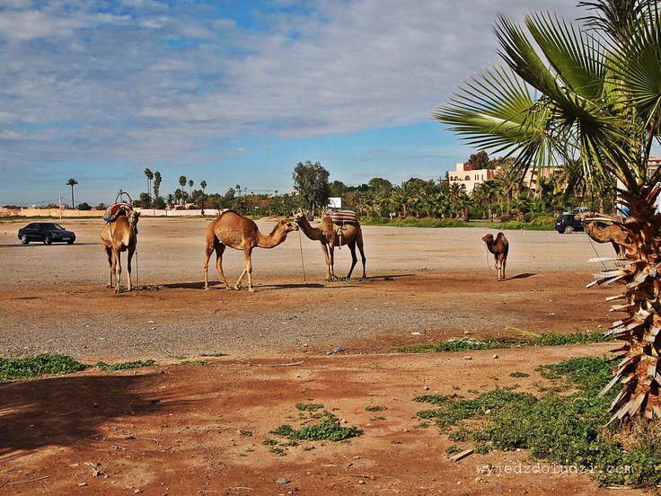 Marakesz, Maroko