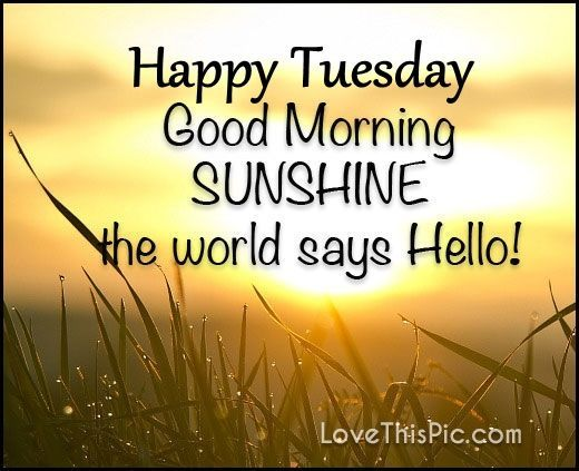 Best 25 Morning Quotes Ideas On Pinterest: The 25+ Best Happy Tuesday Quotes Ideas On Pinterest