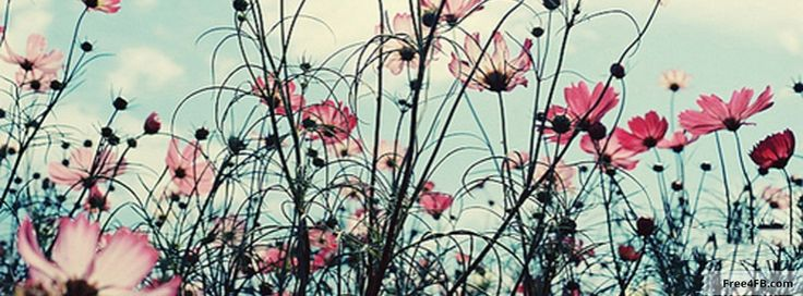 Flowers Facebook Cover Photos Roses Covers 25965wall.jpg
