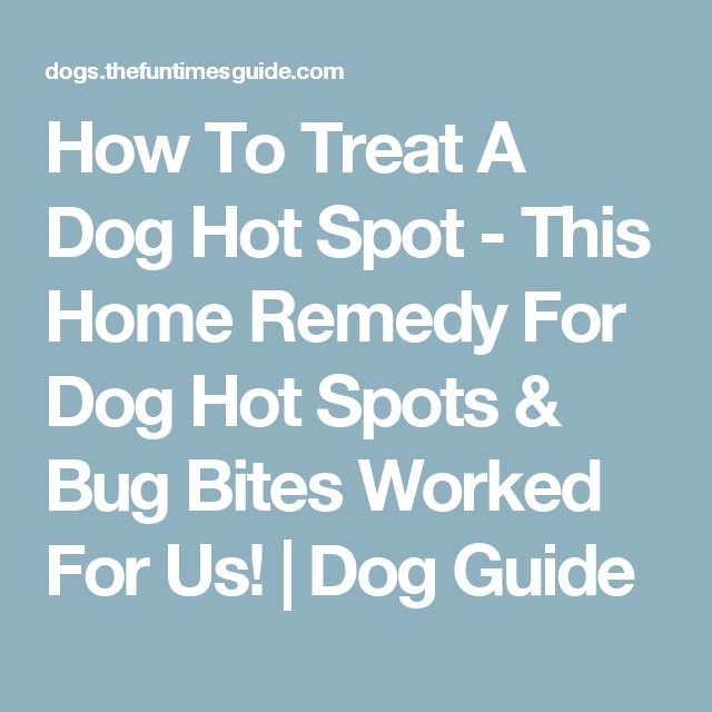 How To Treat A Dog Hot Spot - This Home Remedy For Dog Hot Spots & Bug Bites Worked For Us! | Dog Guide