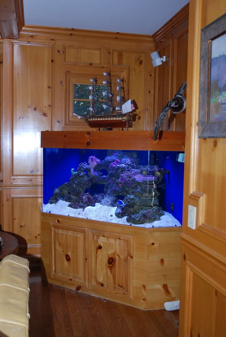 300 Gallon corner aquarium. Houses LPS (Large Polyp Stony) corals and a variety of small reef safe fish
