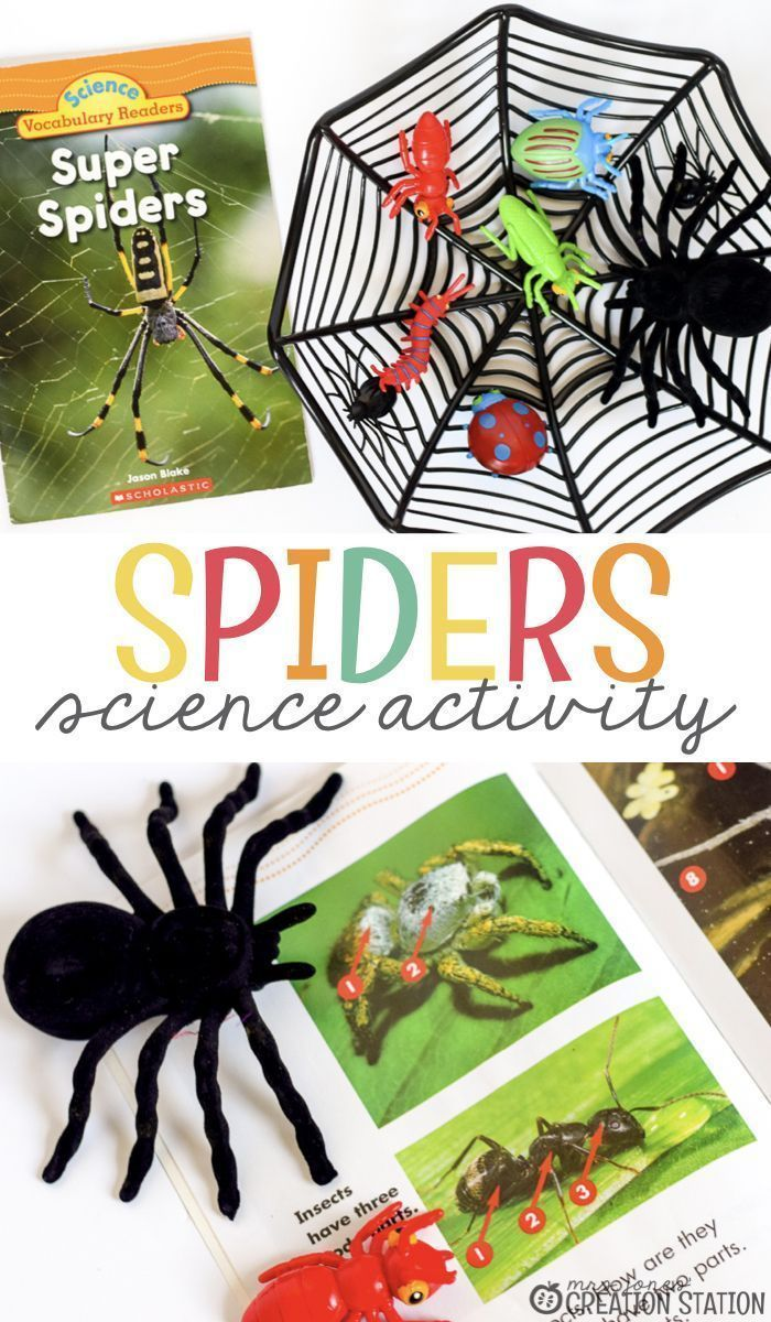 Spider Science For Little Learners Science Activities Spider Activities Preschool Science Activities [ 1200 x 700 Pixel ]