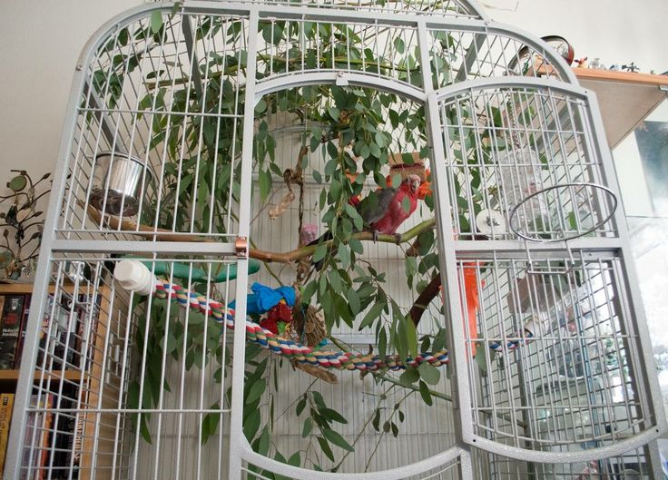 Sugar Glider cage with eucalyptus branches . . .