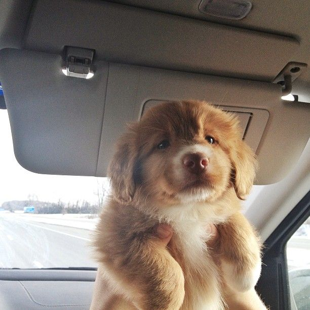Fluffy pup. I want it!