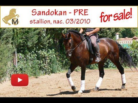 for sale: Sandokan PRE stallion