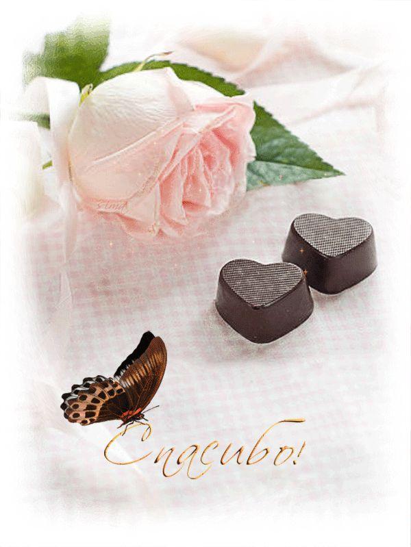 Анимация Нежная розовая роза, бабочка на надписи, шоколадные сердечки, (Спасибо!) автор lady serafima, гифка Нежная розовая роза, бабочка на надписи, шоколадные сердечки, (Спасибо!) автор lady serafima