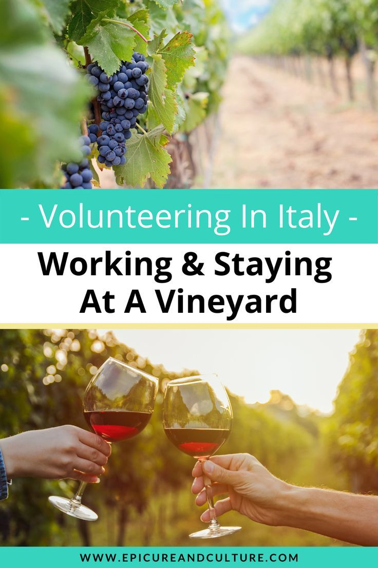 Vineyard Work In Italy A Fun Unique Volunteer Experience In 2020 Italy Farm Stay Best Travel Guides