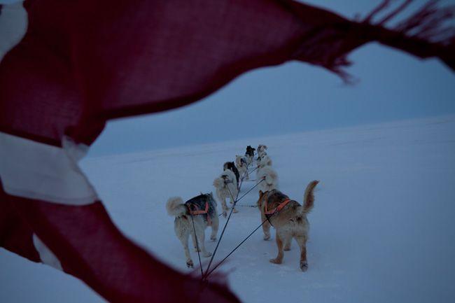グリーンランド最北部にある北基地付近の凍った海の上を、デンマーク国旗をはためかせながら進む犬ぞり。警備隊員は犬たちをうまく導かなくてはならない。ホワイトアウトの状態になって地形の見分けがつかないときは、GPSとコンパスに頼ることになる。