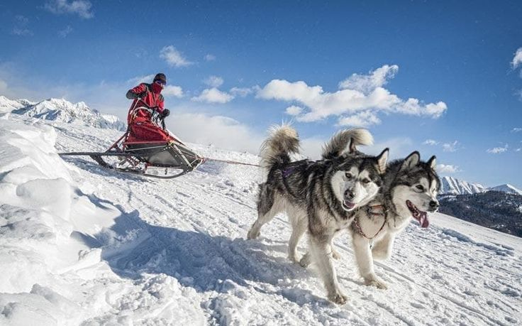 Father Christmas may be the most obvious reason to visit Lapland, but there is far more to enjoy on a winter visit than snow and red-nosed reindeers