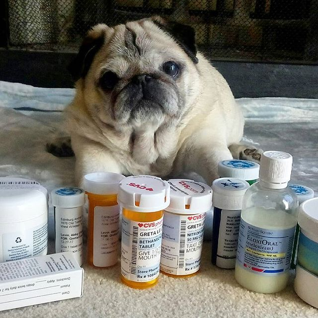 Another Pugly With Medical Needs I Wish My Cuzzy Didnt Need Medicines Either Pugs Funny Cute Pugs Pug Love