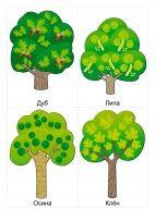 Деревья: дуб, липа, осина, клен.