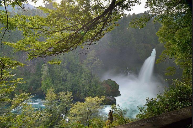 Saltos del Huilo Huilo Reserva Biológica Región de los Ríos Chile Selva Valdiviana 2º mayor bosque templado lluvioso que del mundo Único en Sudamérica