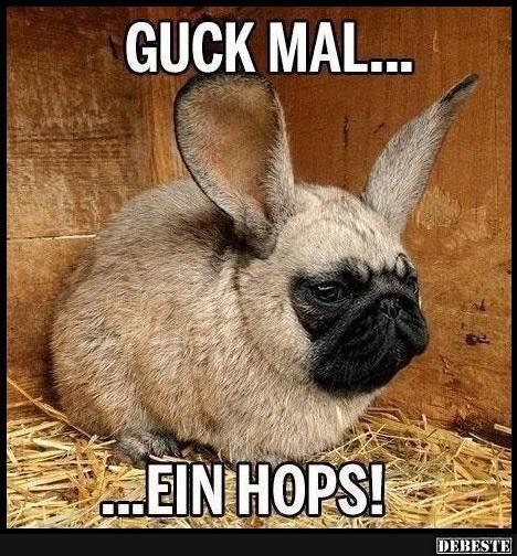 Guck mal.. ein Hops! | Lustige Bilder, Sprüche, Witze, echt lustig