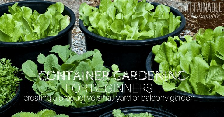 Vegetable Planting Guide: How to Start Growing Your Own Food