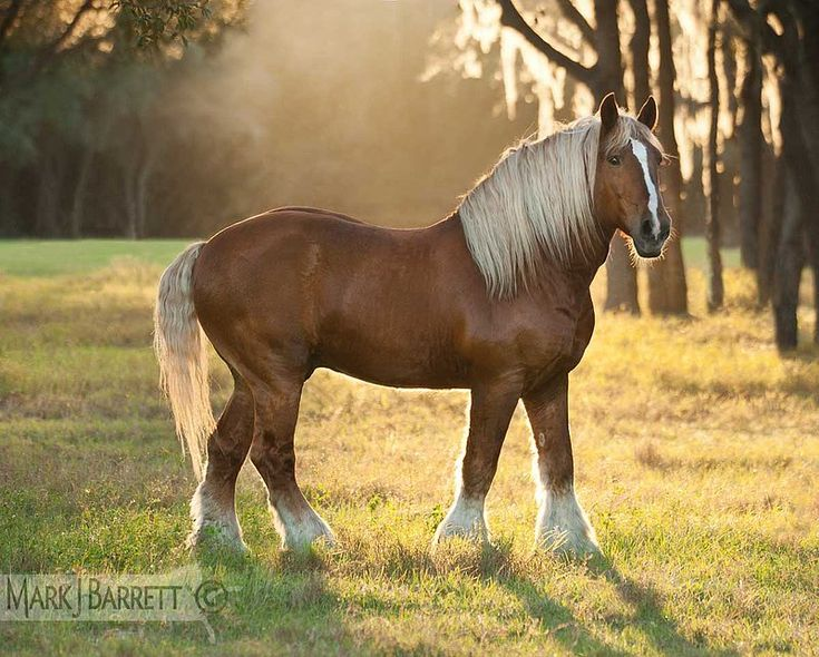 an overview of the common mans pleasure horse and the work by horse breed association Overview quarter horse breed paint horse breed appaloosa breed thoroughbred breed irish draught breed video akhal-teke horse breed irish tinker breed video.