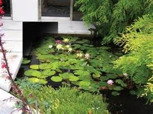 34 best images about aquatic plants from florida pond for Garden pond management