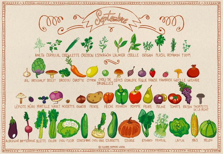 Fruits et Légumes de Septembre   Liste des fruits et légumes de saison via fruits-legumes.org Illustration par Pissenlit au Jardin