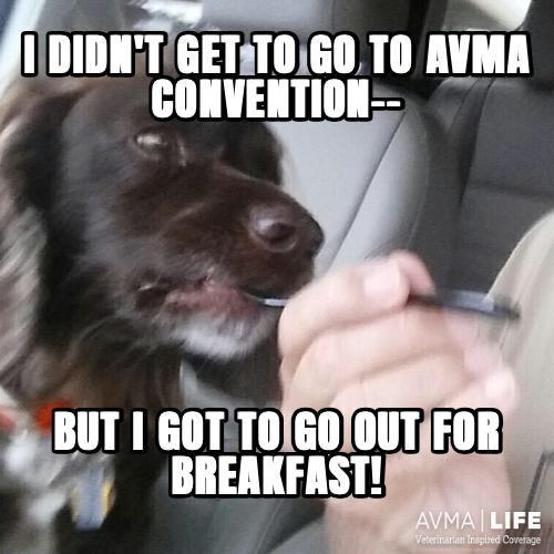 Otter missed AVMA Co