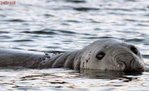 Projeto de conservação percorre praias do litoral do Paraná para salvar animais