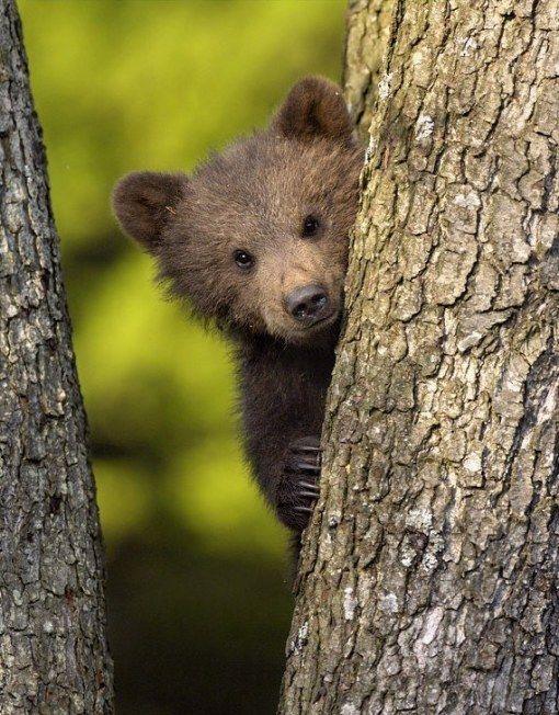 Меня зовут Пузян Потапович Бурый, но все называют меня просто Пузяша. смешная история про медвежонка http://airfriend.ru/articles/65912
