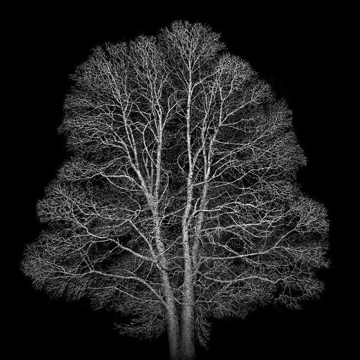 "Irene kung su Twitter: ""Tree of Life 1... #trees #photography https://t.co/b3oUnNGMoG"""