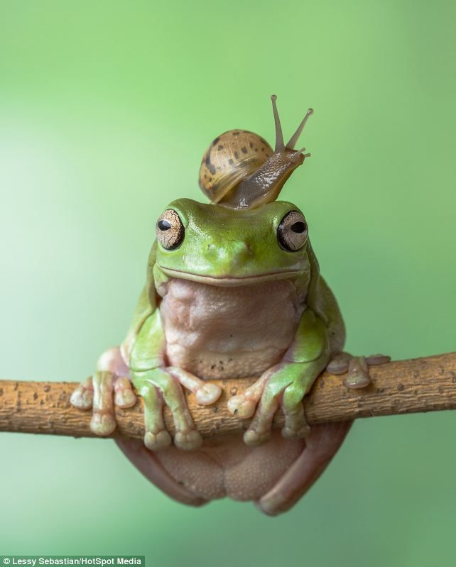 Top o' the world, ma, top o' the world: The snail sits happily on the amphibian's head...