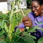 There's a lot being made of Detroit's urban farming movement - especially regarding entrepreneurs and land-use implications. But urban farming can also change city residents. Take Brightmoor, for example -- a neighborhood where community efforts to establish a plot of veggies and flowers has impacted its residents in a number of different ways.