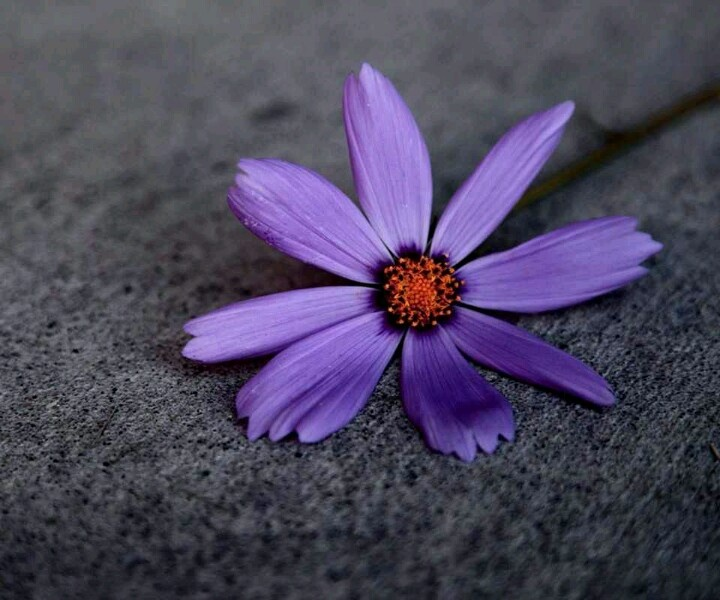flowers devine wallpaper - photo #37