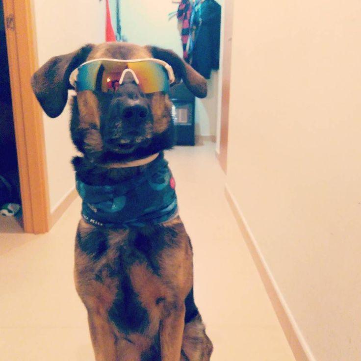 Alguien me está pidiendo ir a la nieve  #happydogs #dogsofinstagram #dogoftheday  #dog #gos