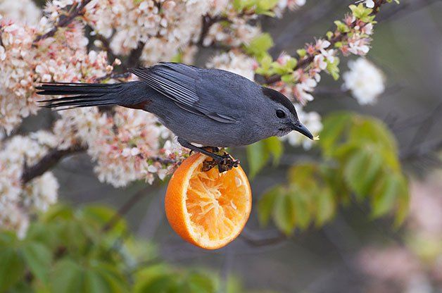 how to keep birds from eating my lawn seed